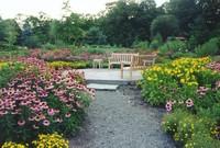Садовые многолетние растения от Greensad — главное украшение любого цветника