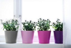 Горшечные растения для украшения помещений