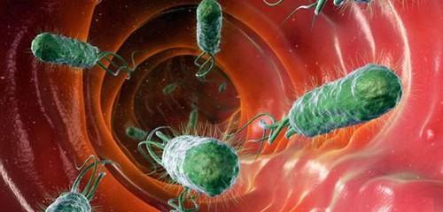 Bactefort — у паразитов нет шансов на выживание