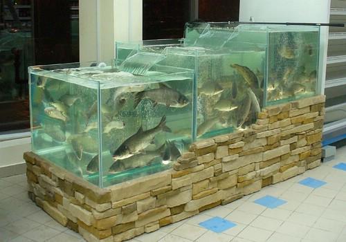 Зачем нужен торговій аквариум?